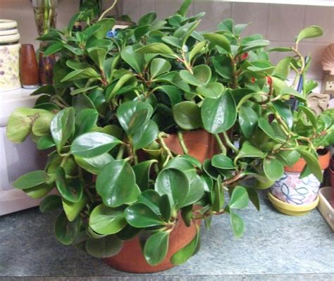 beautiful indoor plants   filter  air