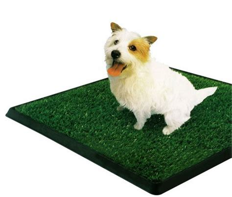 apartment potty ᗖ block for ᗗ dogs dogs summer heat relief us74