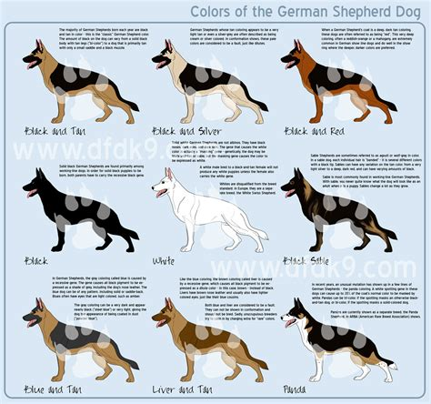 german shepherd color chart german shepherd colors by mausergirl on deviantart