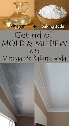 how to get rid of mold on the bathroom ceiling 1000 images about clean on pinterest how to remove