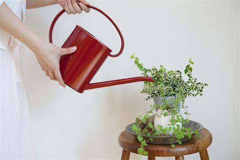 blumen bewässerung im urlaub automatische bew 228 sserung zimmerpflanzen die besten 17