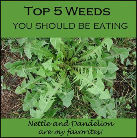 the wellness garden grow eat and walk your way to better health books eat your weeds top 5 edible weeds healthy holistic