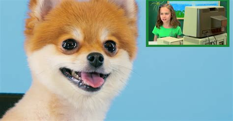 what are pomeranians known for pomeranians are completely unamused by