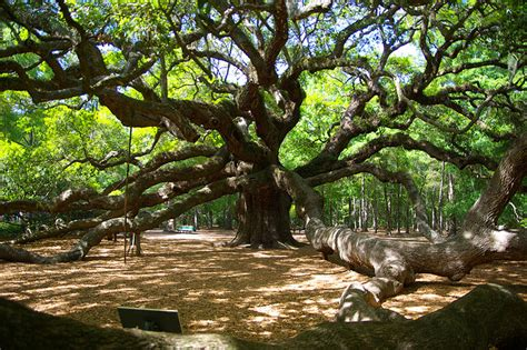 Trees From Around The World by Trees Around The World Of The Now