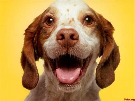 imagenes gatos alegres perros y gatos con piel y pelo un regalo de reyes