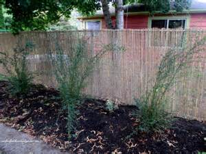 hiding chain link fences the gardening cook