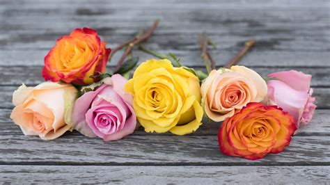 what do different color roses ask ella do different colored roses different
