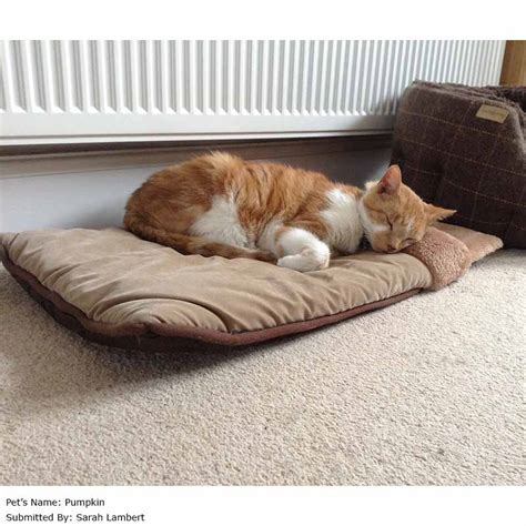 self warming cat bed purrshire self warming cat bed 57 x 39cm on sale free