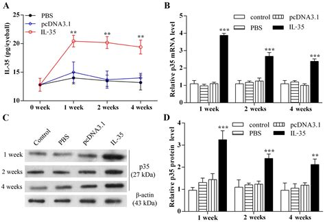 injection volume 3 1534302484 effects of an intravitreal injection of interleukin 35 expressing plasmid on pro inflammatory