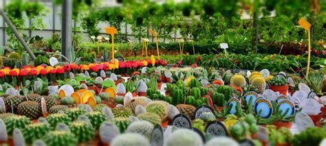 acquistare fiori dove poter acquistare le piante per la casa
