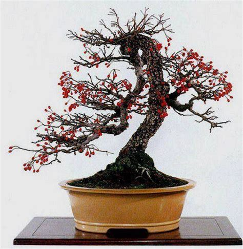 fruit bearing bonsai tree 59 best images about quot fruit bearing bonsai world quot on
