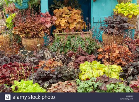 gardening in georgia