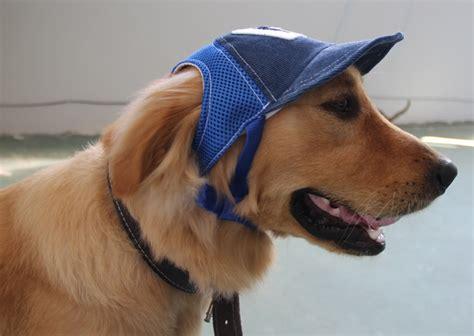 canapé pour grand chien casquette pour chien casquette en velours bleue pour chien