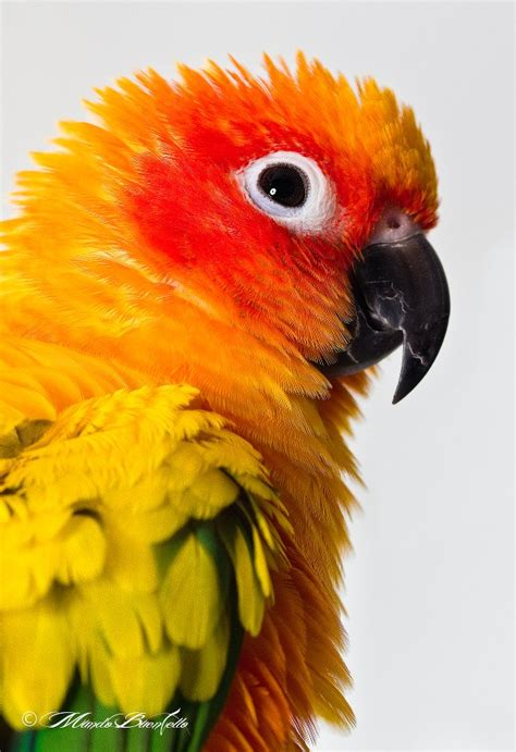Photojojo Gift Card - creative photography websites tips inspiration ideas contests macro monday
