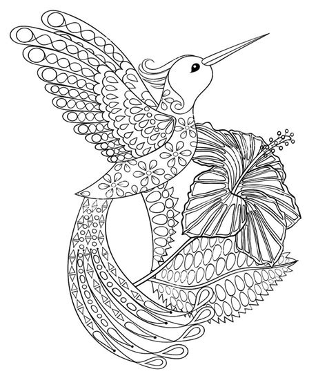 coloring pages for adults hummingbird 1000 images about adult coloring pages on pinterest gel