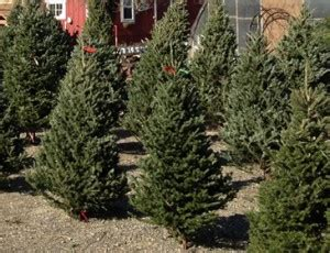 choose and cut trees in illinois chicagoland illinois tree farms choose and cut trees tree lots with pre
