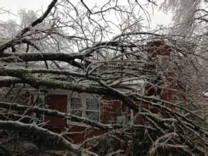 home insurance and fallen trees does homeowners insurance cover damage from a fallen tree paramount insurance agency