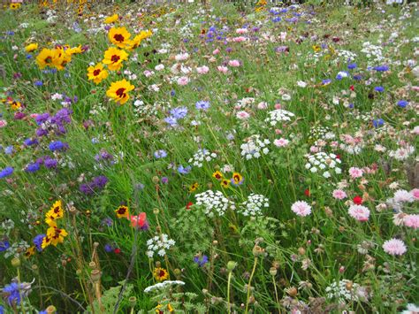 How to plant a prairie garden   Farm and Dairy