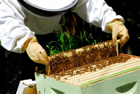 How To Keep Bees Or Bee Keeping In Rhode Island 5 steps for handling your honey bees keeping backyard bees