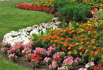 prevent weeds in flower beds prevent or kill weeds in flower beds and gardens