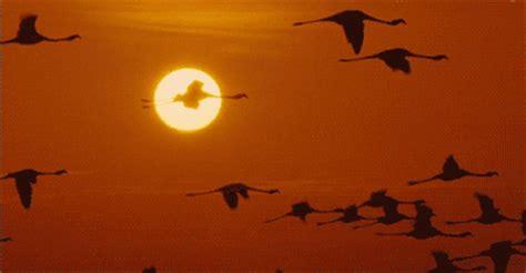 imagenes de karma bird fly gifs animados de flamencos gifmania