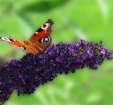 picture summer insect wildlife flower nature