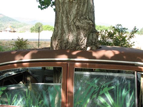 car with tree image file tree growing out of car jpg wikimedia commons