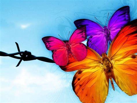 3d Butterfly Wallpaper