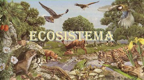 imagenes del negro videla ecosistema ppt video online descargar