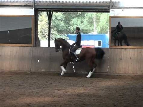 Sho Kuda Vienna 乗馬3級経路 equitation 乗馬クラブクレイン kuda caballo