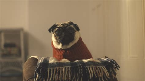 pug advert vision direct advert 2015 a pug s