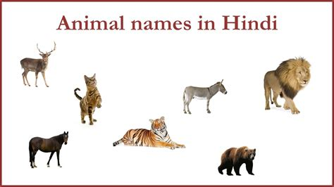 scow meaning in hindi animal names in hindi youtube