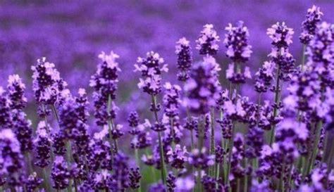 Harga Pupuk Majemuk Npk Cap Bunga Merah bunga lavender jualbenihmurah