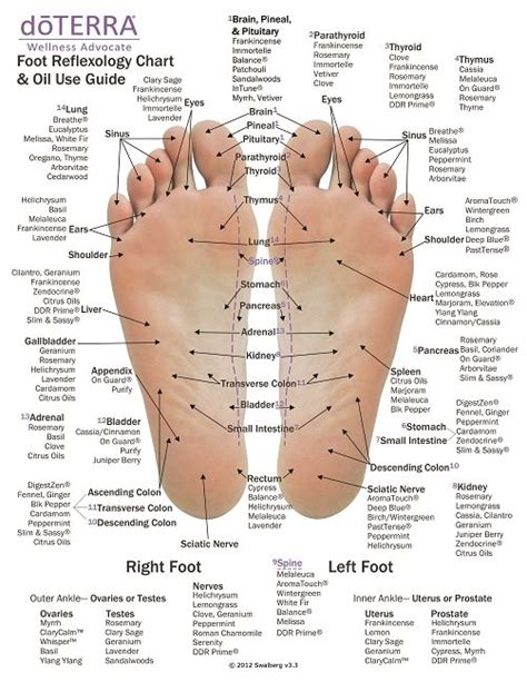 places to apply for this is a great reflexology chart to reference the best