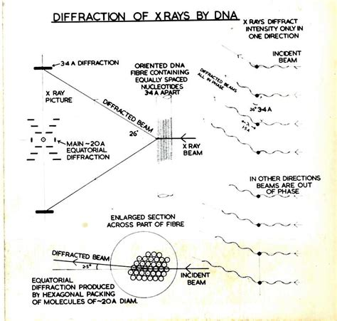 x ray diffraction pattern of dna short and simple ish guide to x ray diffraction dna