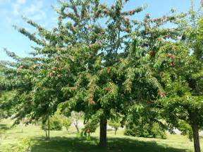 Want a produce department add fruit trees to your yard all oregon