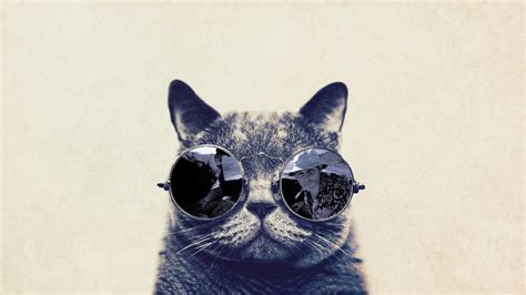 iphone wallpaper cat glasses fashion cat with sunglasses hd funny wallpaper