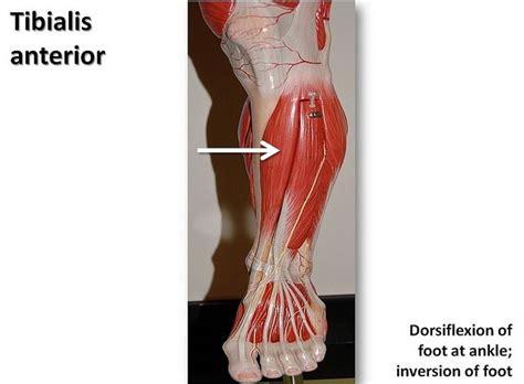 running shoes prevent shin splints style guru fashion