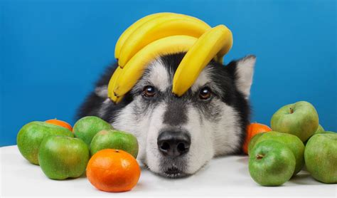 what fruits and vegetables can dogs eat fruit definition can dogs eat fruit