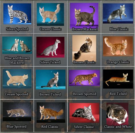 cat pattern types tabby cat facts for kids