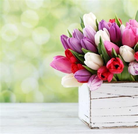 fiori primaverili fiori primaverili i 5 mesi durante il mese di aprile