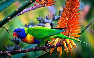 big colorful bird colorful bird hd wallpaper driverlayer search engine