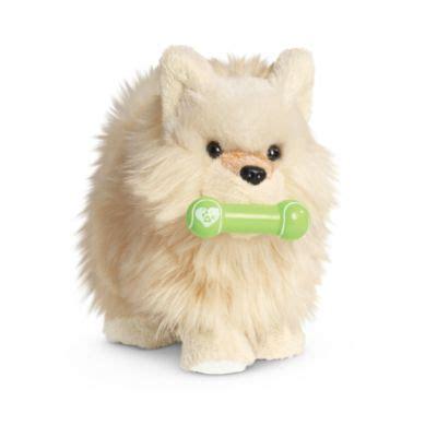 doll pomeranian pomeranian puppy furnaccesstm american