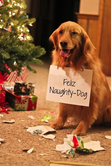 happy holidays  animals images  pinterest happy holidays pet safe   pet