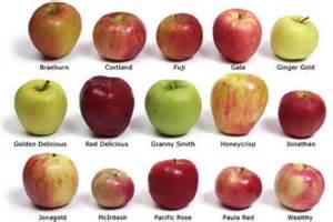 top 5 health benefits of apple