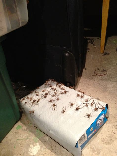 Do Bed Bug Traps Work by 62 Best Images About Bugs And Other Pests On