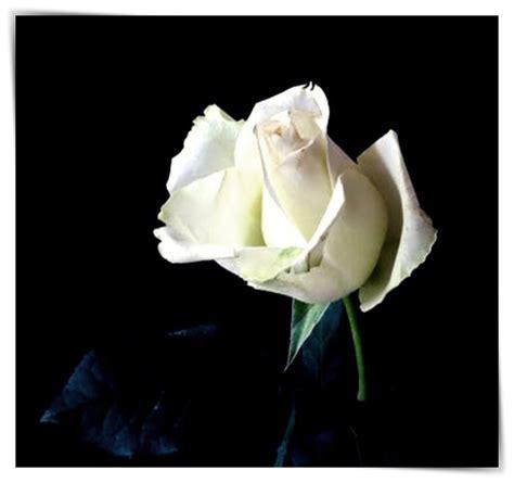 imagenes que se mueven de flores imagenes de rosas que se mueven dibujo imagenes