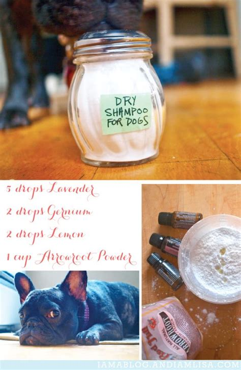 essential oils for itchy dogs the winter dogs and so on
