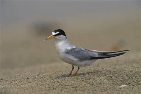 southeast bird checklist great missouri birding trail