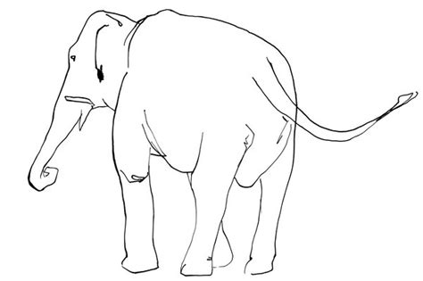 how to draw a doodle elephant elephant line drawing by tomhenderson on deviantart